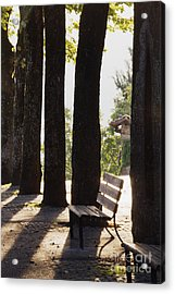 Trees And Bench Acrylic Print by Jeremy Woodhouse