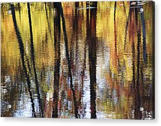 Trees And Fall Foliage Reflected Acrylic Print by Medford Taylor