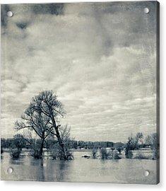Trees In River Rhine Acrylic Print by Dirk Wüstenhagen Imagery