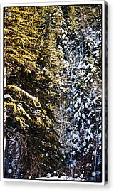 Trees In Taos Village Acrylic Print by Lisa  Spencer
