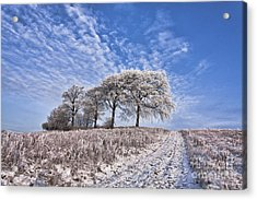 Trees In The Snow Acrylic Print by John Farnan
