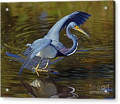 Tri-color Dance Acrylic Print by Larry Nieland