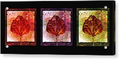 Triptych Leaves  Acrylic Print by Ann Powell