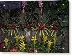 Tropical 1 Acrylic Print by Wanda J King