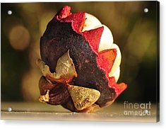 Tropical Mangosteen - The Medicinal Fruit Acrylic Print by Kaye Menner