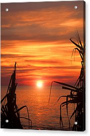 Tropical Sunset V6  Acrylic Print by Douglas Barnard