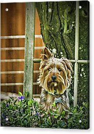 Trouble Again Acrylic Print by DMSprouse Art