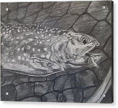 Trout In Net Acrylic Print by Michelle Grove