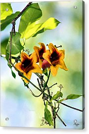 Trumpeting Spring Acrylic Print by Kristin Elmquist