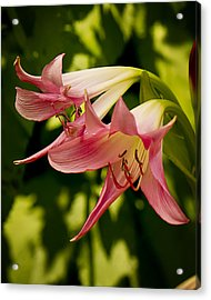 Trumpets Acrylic Print by Michael Putnam