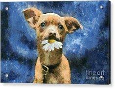 Tuffy Acrylic Print by Aimelle