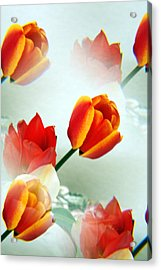Tulip Abstract Acrylic Print by Marilyn Hunt