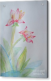 Tulip Duo I  Acrylic Print by Debbie Portwood