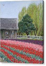 Tulip Season Acrylic Print by Marie-Claire Dole
