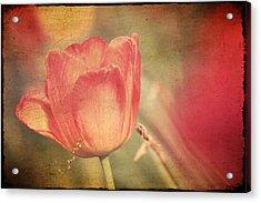 Tulip Tendrils Acrylic Print by Toni Hopper