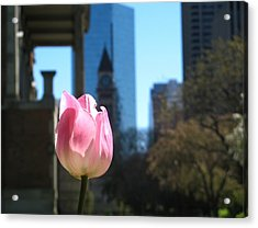 Tulip With Toronto Old City Hall Acrylic Print by Alfred Ng