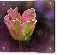 Tulipicity Acrylic Print by Richard Cummings