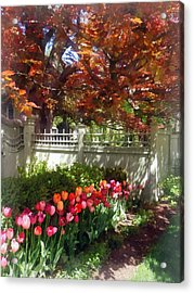 Tulips By Dappled Fence Acrylic Print by Susan Savad