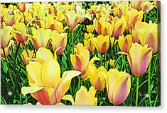 Tulips In New York  Acrylic Print by Russ Harris