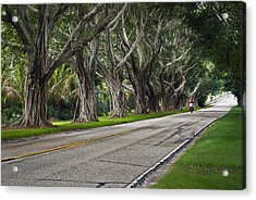 Tunnel Of Trees Acrylic Print by Robert Smith