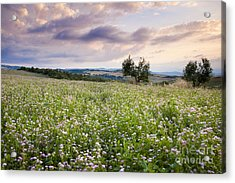 Tuscany Flowers Acrylic Print by Brian Jannsen