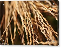Twigs Acrylic Print by Cheryl Young