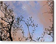 Twilight Acrylic Print by Felix Zapata