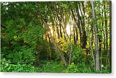 Twilight In The Woods Acrylic Print by Anna Villarreal Garbis