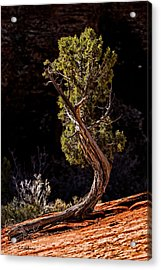 Twisted Reach Acrylic Print by Christopher Holmes