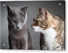 Two Cats Acrylic Print by Nailia Schwarz