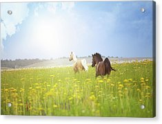 Two Horses Acrylic Print by Arman Zhenikeyev - professional photographer from Kazakhstan