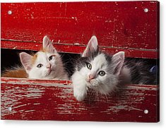 Two Kittens In Red Drawer Acrylic Print by Garry Gay