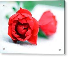 Two Rose Buds Acrylic Print by Susan Leggett