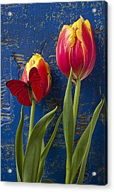 Two Tulips With Red Butterfly Acrylic Print by Garry Gay