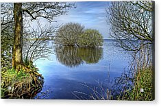 Two Watery Trees  Acrylic Print by Kim Shatwell-Irishphotographer