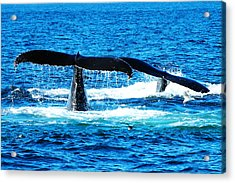 Two Whale Tails Acrylic Print by Paul Ge