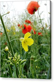Under The Morning Dew Acrylic Print by AmaS Art