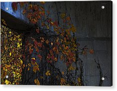 Under The Overpass Acrylic Print by Ron Jones