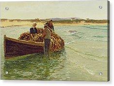 Unloading Kelp Weed  Acrylic Print by Charles William Bartlett