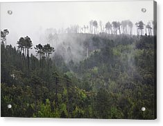 Up In The Clouds. Acrylic Print by Terence Davis