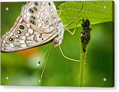 Upclose Moth_1 Acrylic Print by Lisa  Spencer