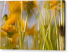Van Gogh Remembered Acrylic Print by Graham Hughes