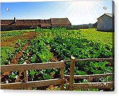 Vegetable Farm Acrylic Print by Carlos Caetano