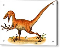 Velociraptor Acrylic Print by Roger Hall and Photo Researchers