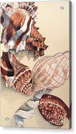 Vertical Conch Shells Acrylic Print by Glenda Zuckerman