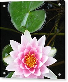 Vertical Water Lily Acrylic Print by Debbie Finley