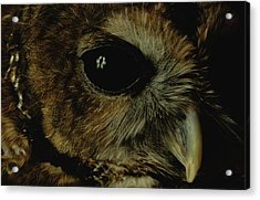 View Of A Northern Spotted Owl Strix Acrylic Print by Joel Sartore