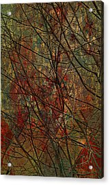 Vines And Twines  Acrylic Print by JC Photography and Art