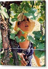 Vineyard Harvest Acrylic Print by Padre Art
