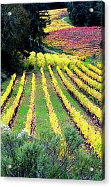 Vineyard Sonoma 7 Acrylic Print by Anthony George